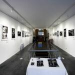 Exposition Beringei, les gorilles du Rift, Sébastien Meys